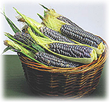 A basket of blue corn, commonly used for chips, muffins and pancakes in the Southwest.
